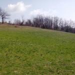 Na prodaju parcela pogodna za placeve – Jasikovice